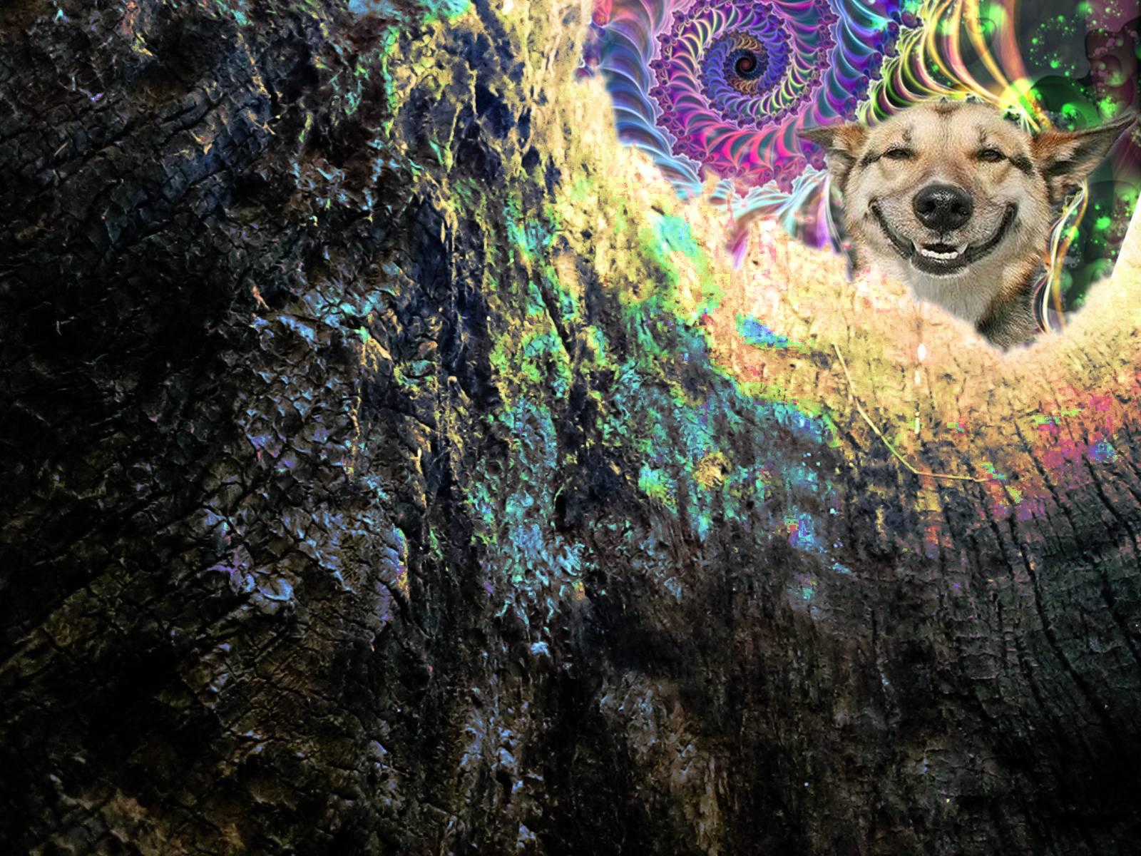 Stoner Wallpapers - Wallpaper Cave