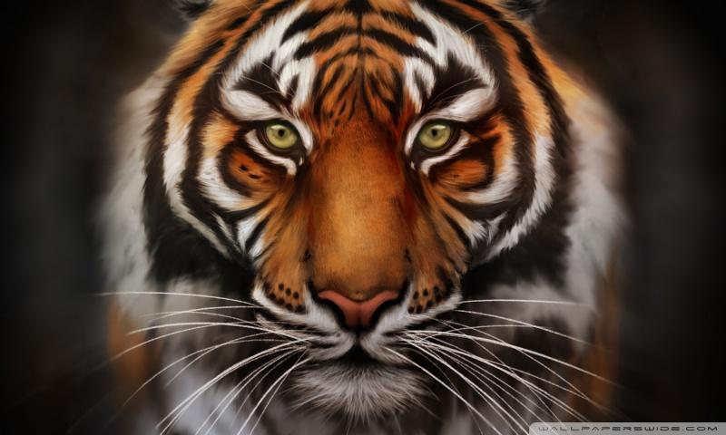 Save-The-Tiger HD desktop wallpaper : Widescreen : High Definition