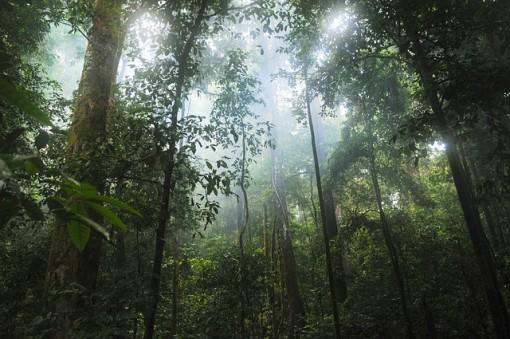 Tropical Rainforest Biome: Location, Temperature, Precipitation