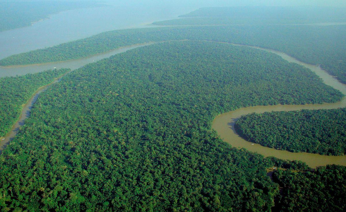 Tropical rainforest - Wikipedia