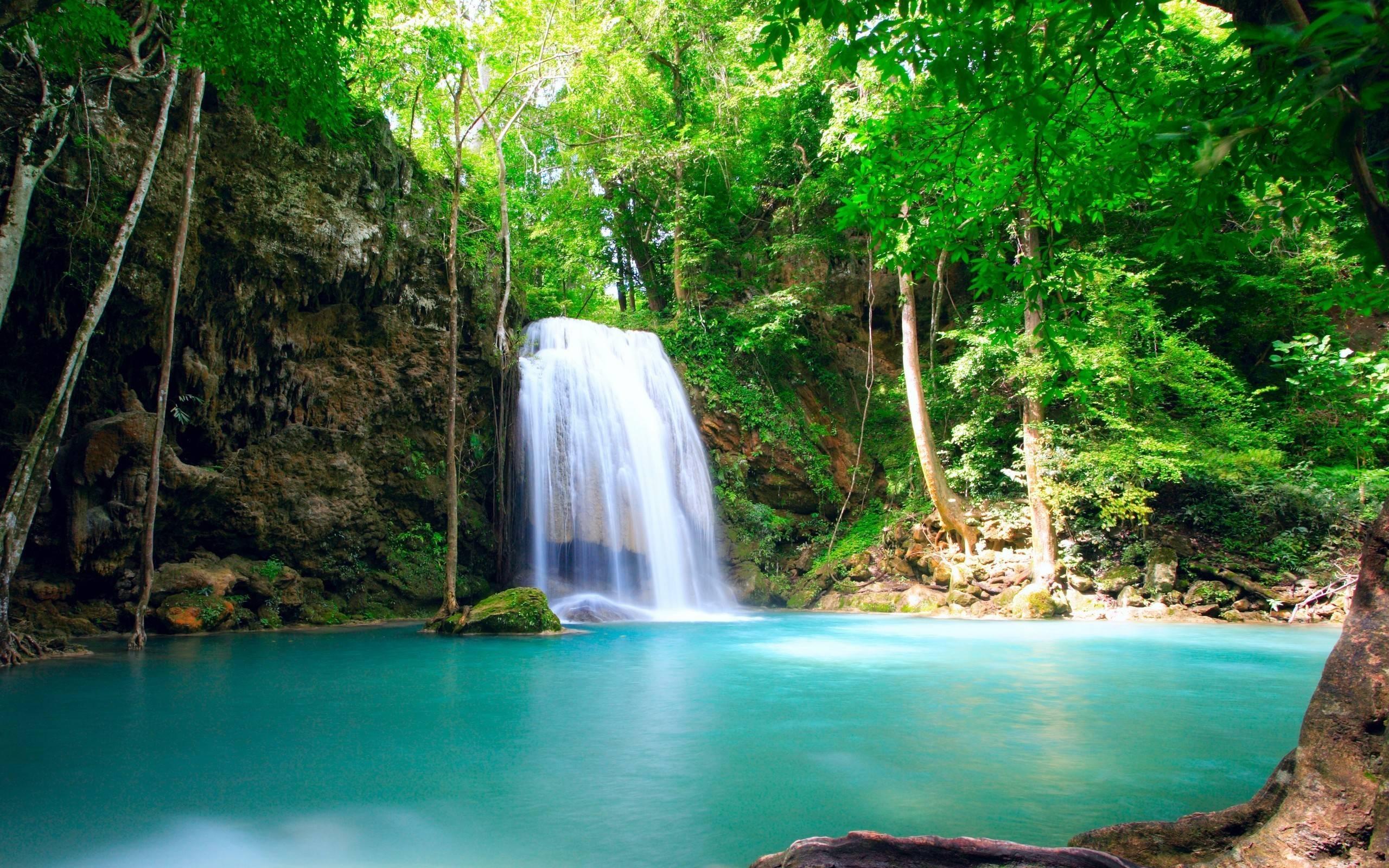 Tropical Rainforest Wallpapers - Wallpaper Cave