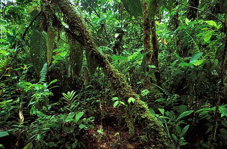 tropical rainforest | Britannica com