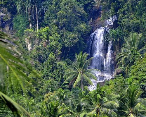 tropical rainforest by chris chang on Prezi