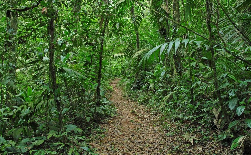 Tropical Rainforest and Chocolate Adventure - San Jose Tour