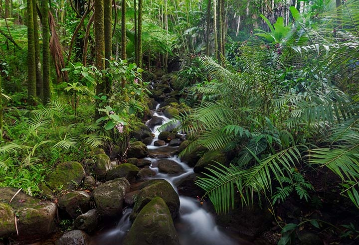 Tropical Forests Play Huge Role in Inhaling Emissions | Climate