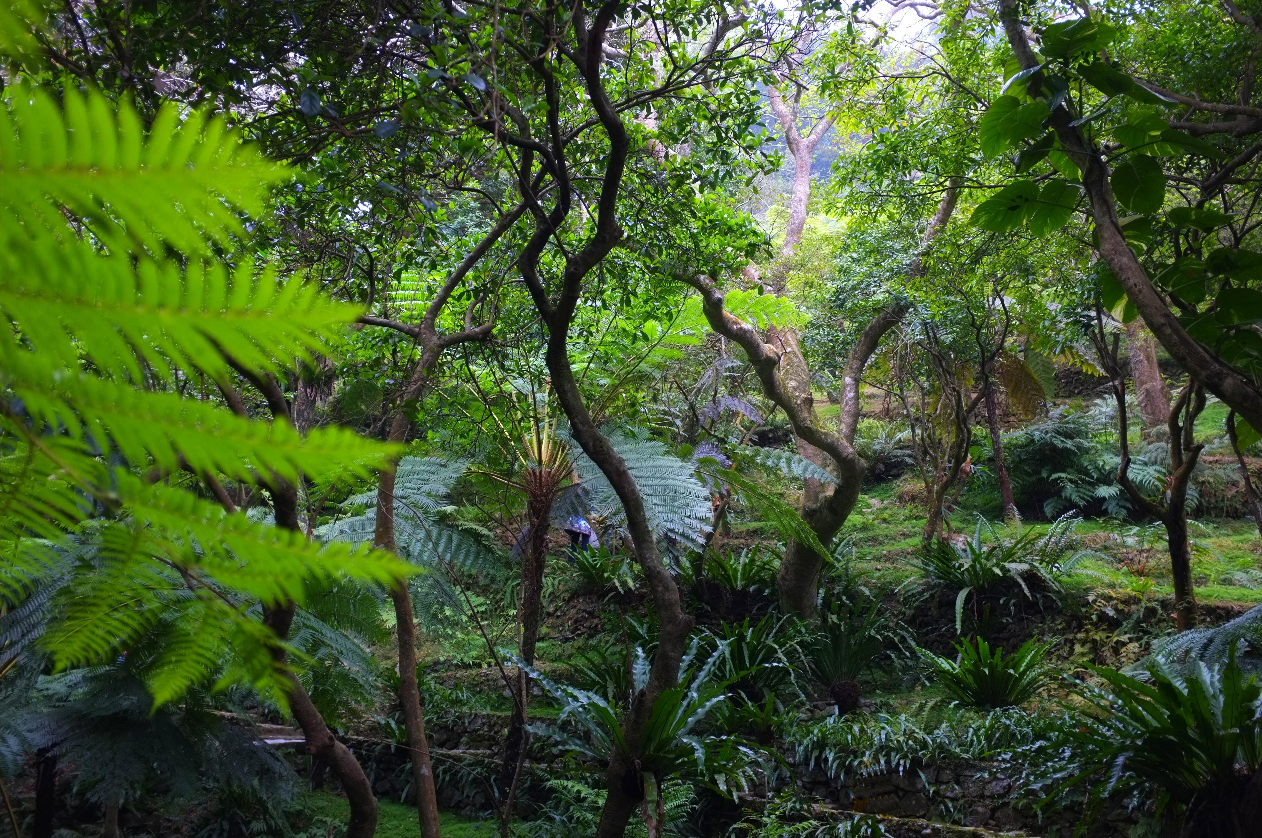 tropical forest | retireediary