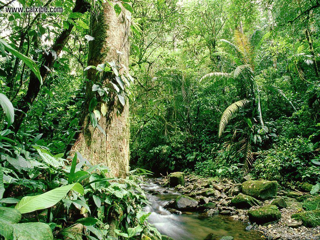 Tropical Forest Wallpaper - WallpaperSafari