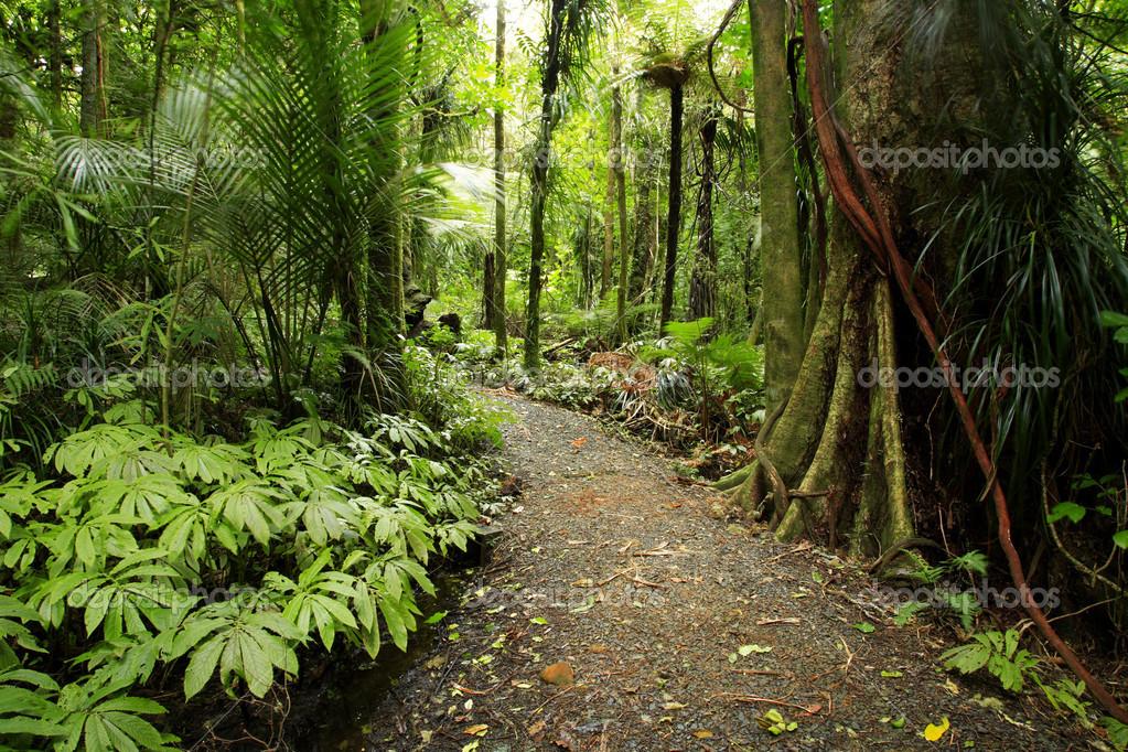 Tropical forest — Stock Photo © stillfx #4167863