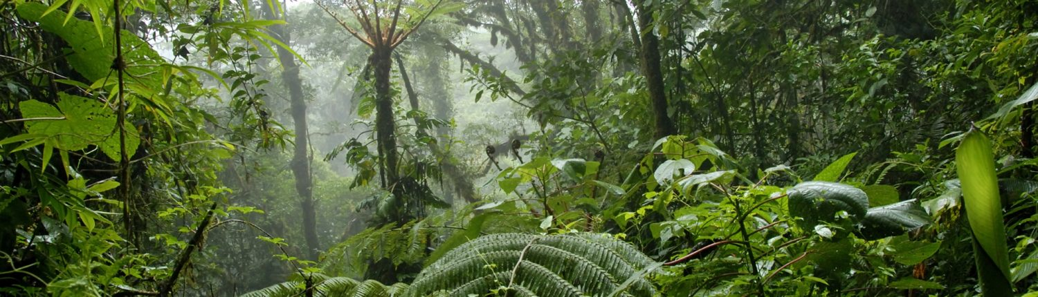 The Oxford Centre for Tropical Forests