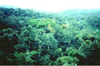 Rainforest Biomes