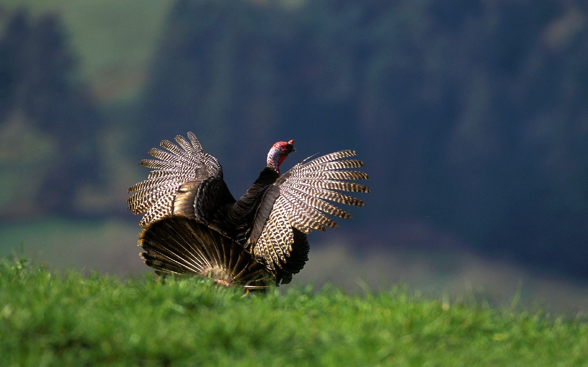 Free Turkey Wallpapers - Wallpaper Cave