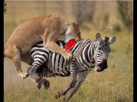Wild animals pictures