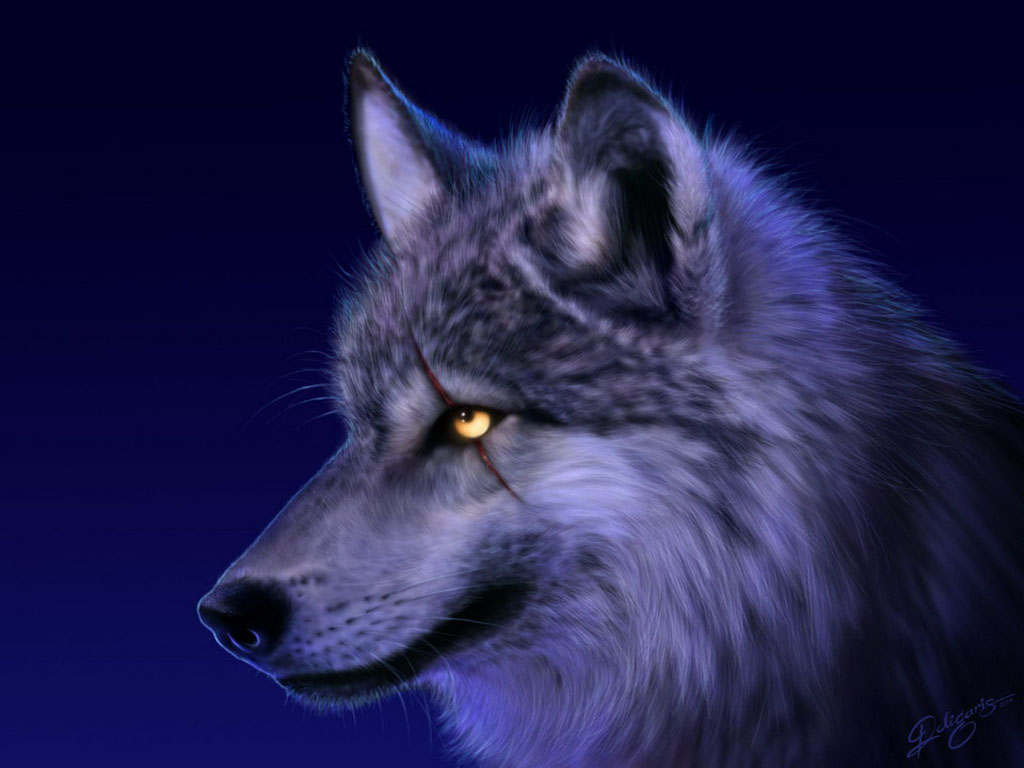 1000+ images about wolf pictures on Pinterest | Pictures of